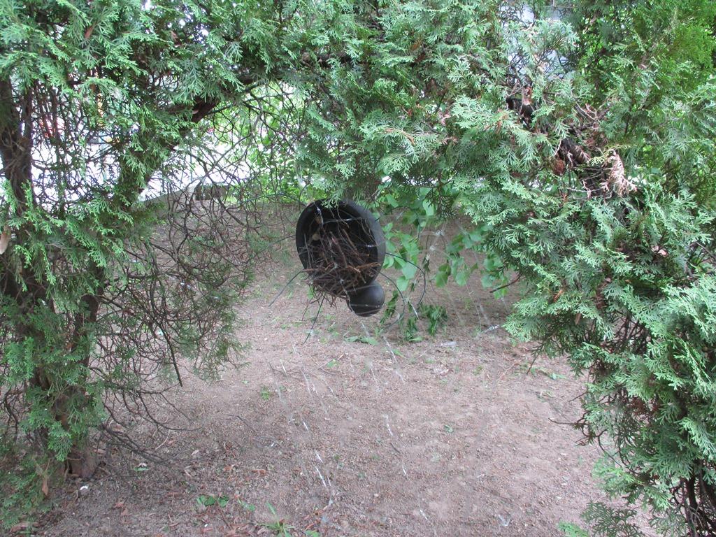 Foto-pavúk-16